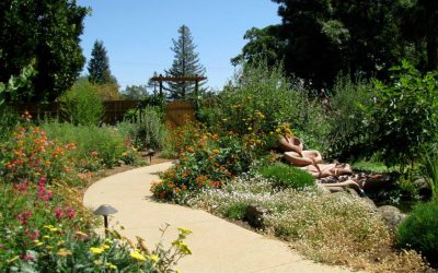 Join Us! Ecological Landscape Design Open House @ The Petaluma Seed Bank – October 27th 2016, 5:30 – 7:30 PM
